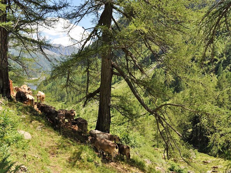 Image 0 - La Vallemaggia e i suoi famosi alpeggi