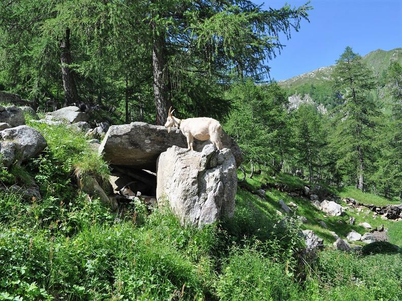 Image 2 - La Vallemaggia e i suoi famosi alpeggi
