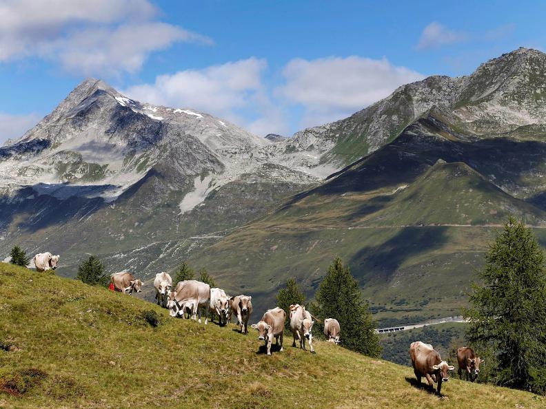 Image 13 - San Carlo - Cristallina - Ossasco