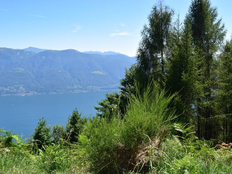 Image 8 - Rasa - Ronco sopra Ascona
