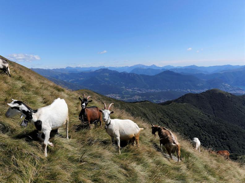 Image 5 - Sentiero Smeraldo Ticino-Lombardia: Tappa 13