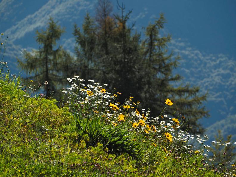 Image 9 - Monte Comino - Costa - Intragna