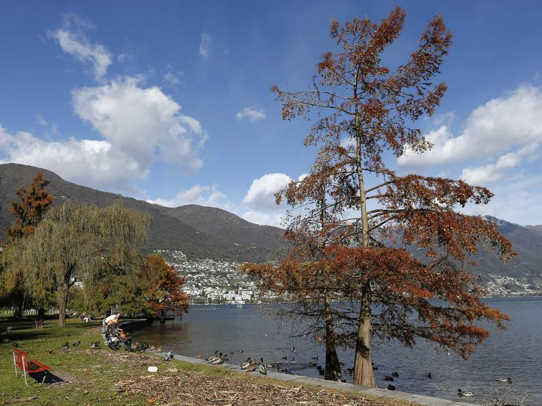 Image 14 - Tenero - Ascona: the beauties of Lake Maggiore
