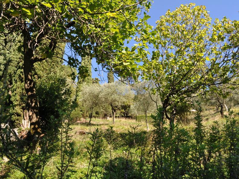 Image 2 - Olive path, Gandria