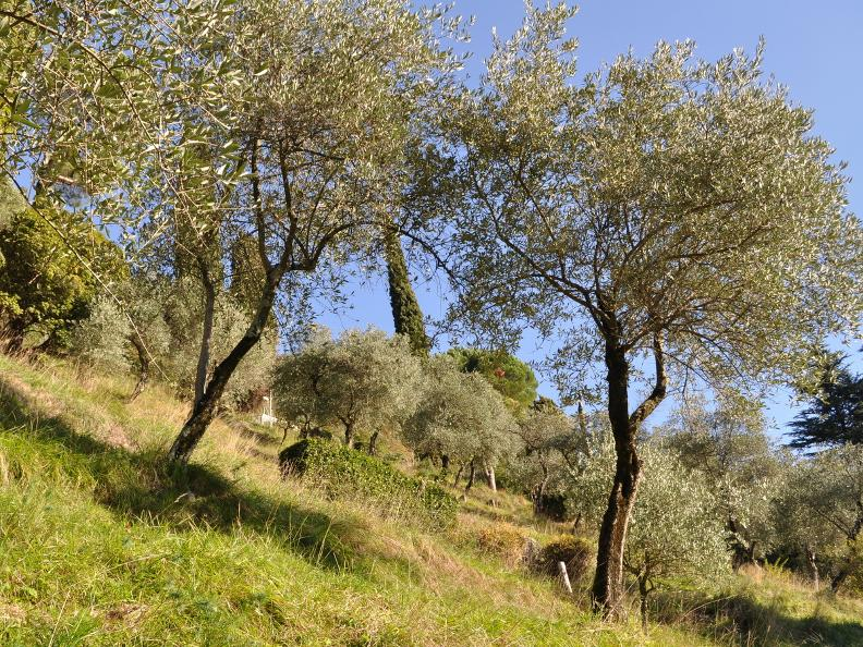 Image 3 - Olivenweg, Gandria
