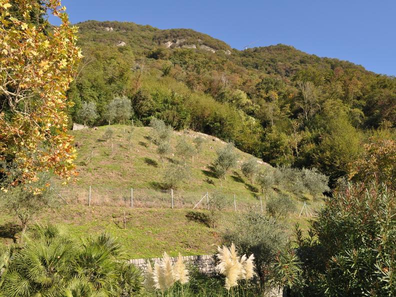 Image 5 - Olive path, Gandria