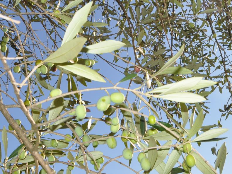 Image 0 - Olive path, Gandria