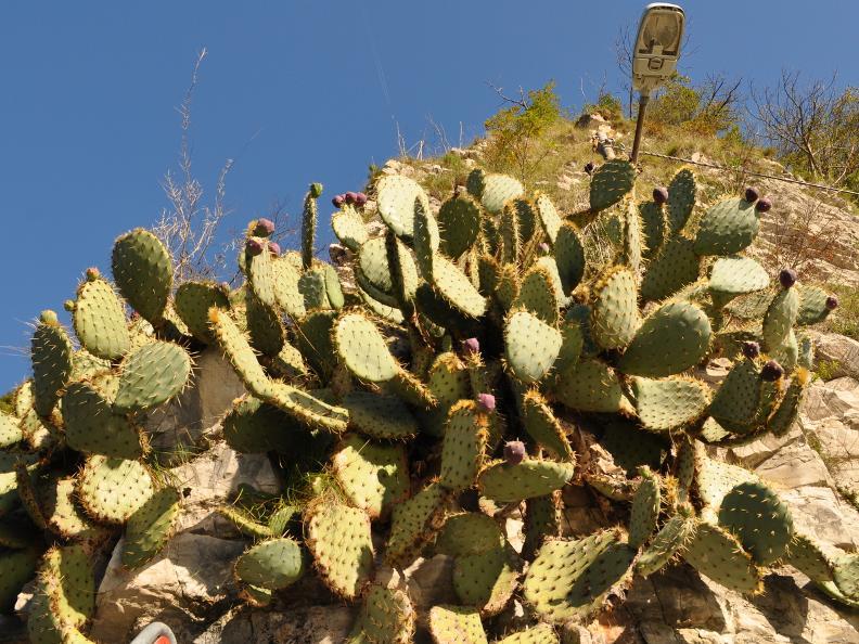 Image 8 - Sentiero dell'olivo, Gandria