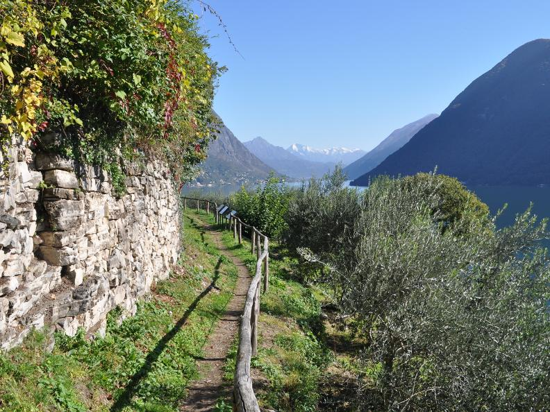 Image 17 - Olive path, Gandria