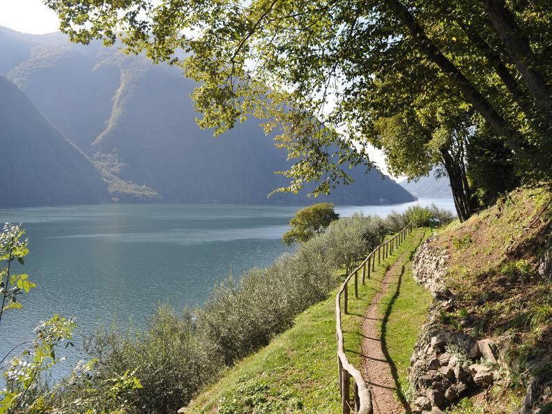 Image 18 - Olive path, Gandria