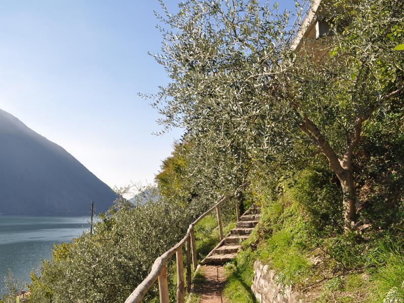 Image 19 - Olive path, Gandria