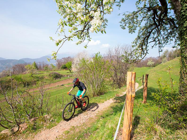 Image 0 - Vicania Bike