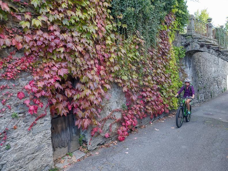 Image 10 - Tresa Bike