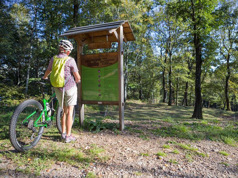 Image 6 - Castagno Bike