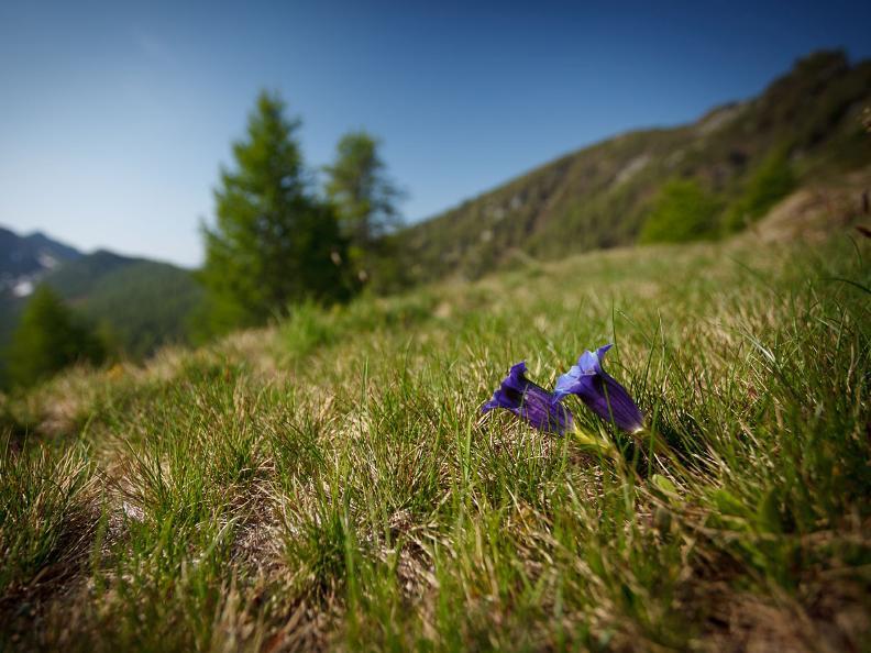 Image 1 - Tag 1: Lodano - Castèll - Alp da Canaa