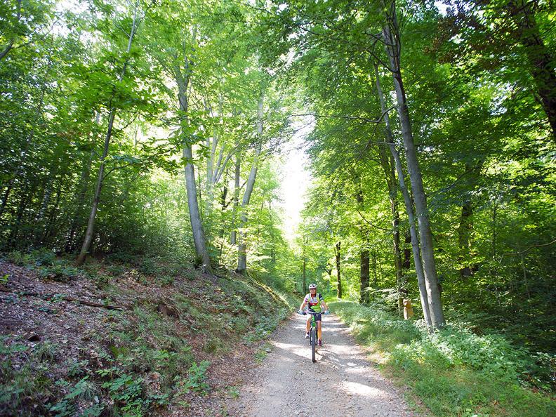 Image 7 - Origlio Bike
