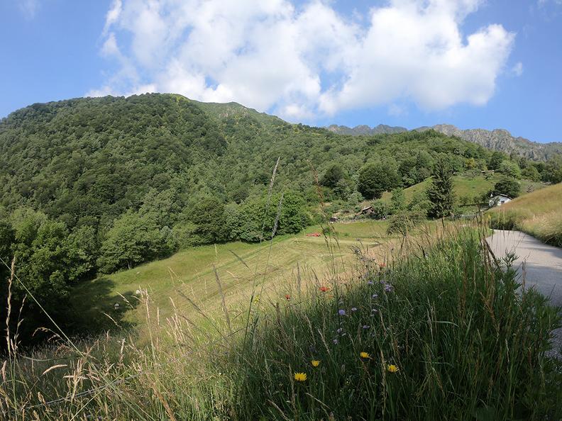 Image 0 - Mergugno: Im goldenen Wald