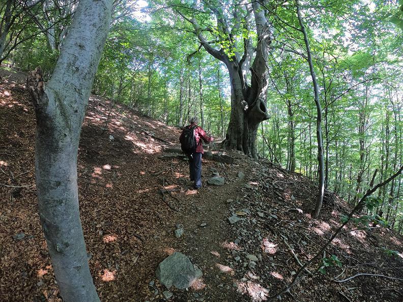 Image 1 - Mergugno: Im goldenen Wald