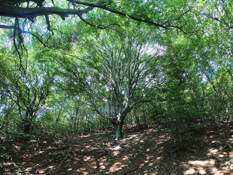 Image 2 - Mergugno : dans la forêt jaune