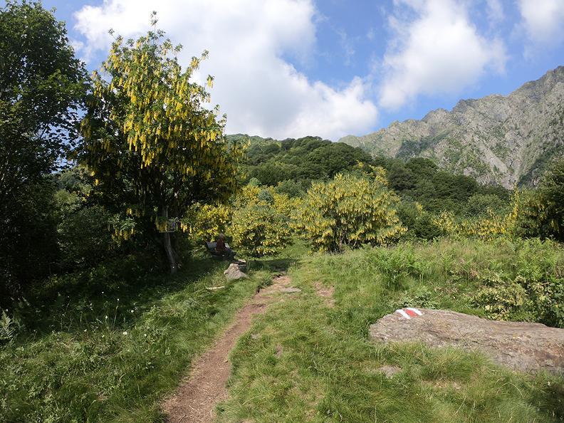 Image 5 - Mergugno : dans la forêt jaune