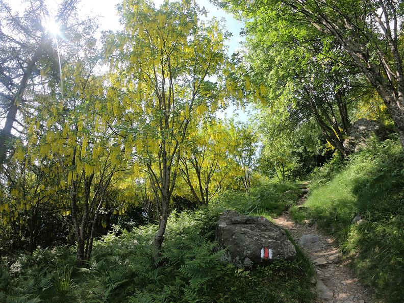 Image 3 - Mergugno: in the yellow forest