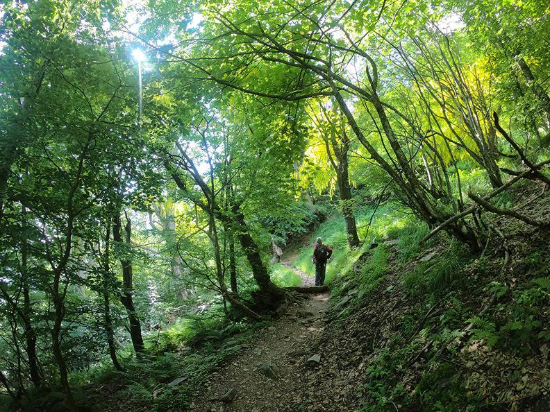 Image 6 - Mergugno : dans la forêt jaune