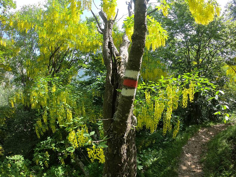 Image 9 - Mergugno: in the yellow forest