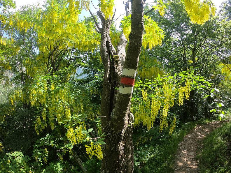 Image 9 - Mergugno : dans la forêt jaune
