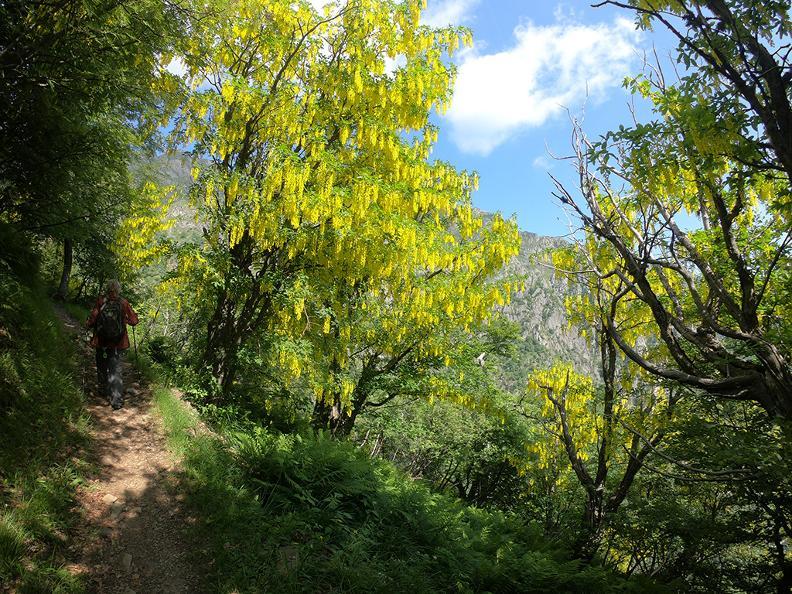 Image 10 - Mergugno : dans la forêt jaune