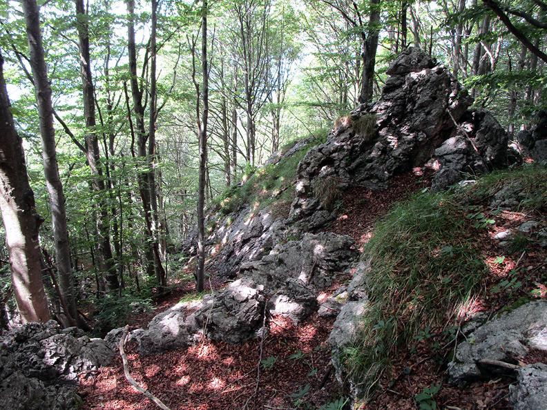 Image 9 - Denti della Vecchia: among pines and beeches