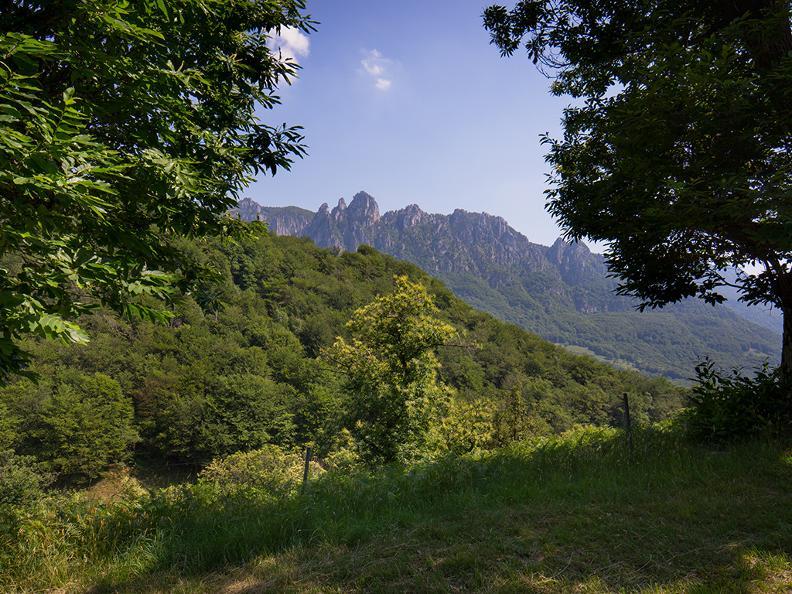 Image 3 - Denti della Vecchia: among pines and beeches