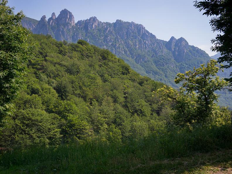 Image 5 - Denti della Vecchia: among pines and beeches