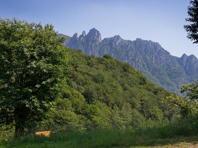 Image 4 - Denti della Vecchia: among pines and beeches