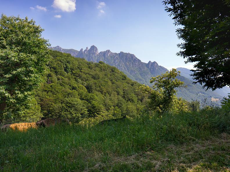 Image 7 - Denti della Vecchia: among pines and beeches