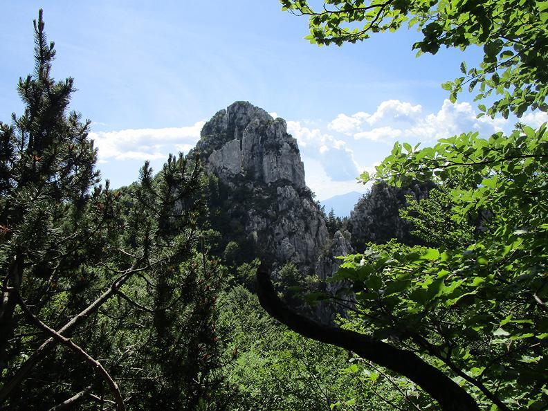 Image 8 - Denti della Vecchia: among pines and beeches