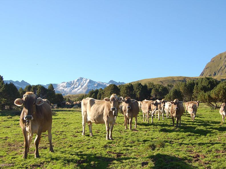 Image 5 - Lukmanier Alps