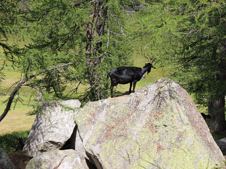 Image 11 - Trekking dei laghetti alpini