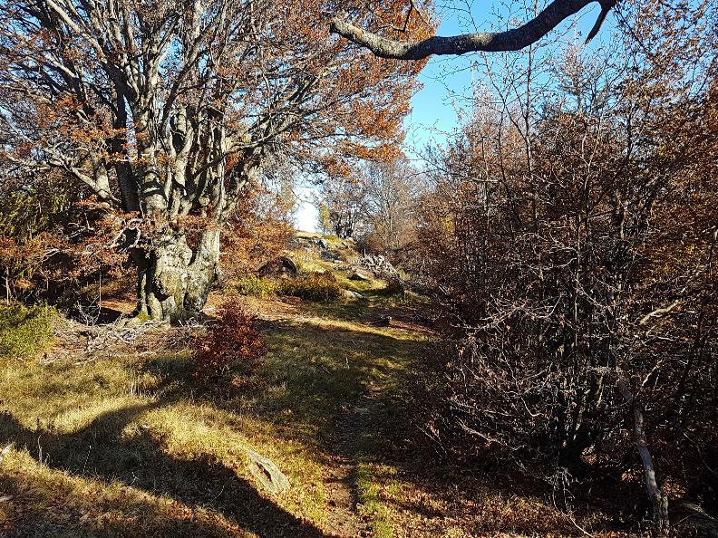 Image 4 - Salmone Trail