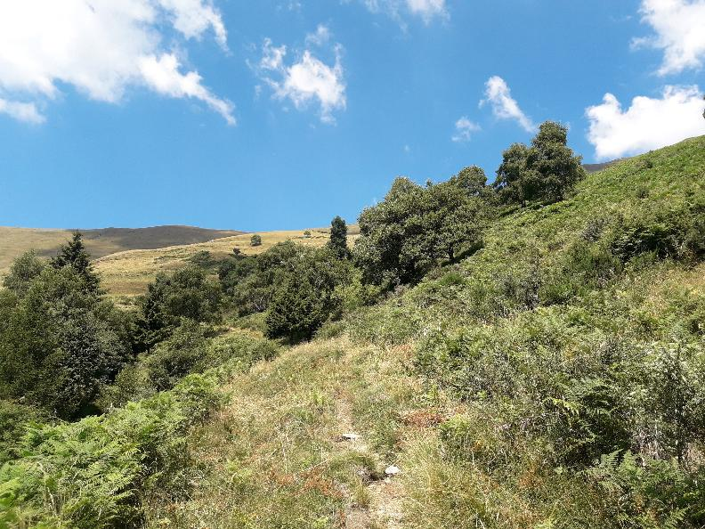 Image 6 - The Alpine Pasture Trail