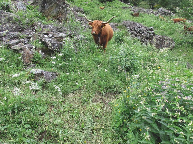 Image 2 - On the way of alpine pastures-5: Monte Lema - Alpe Agario - Mugena