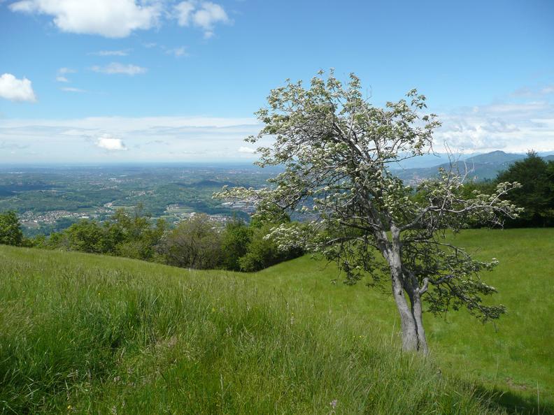 Image 1 - Rifugio Alpe Caviano